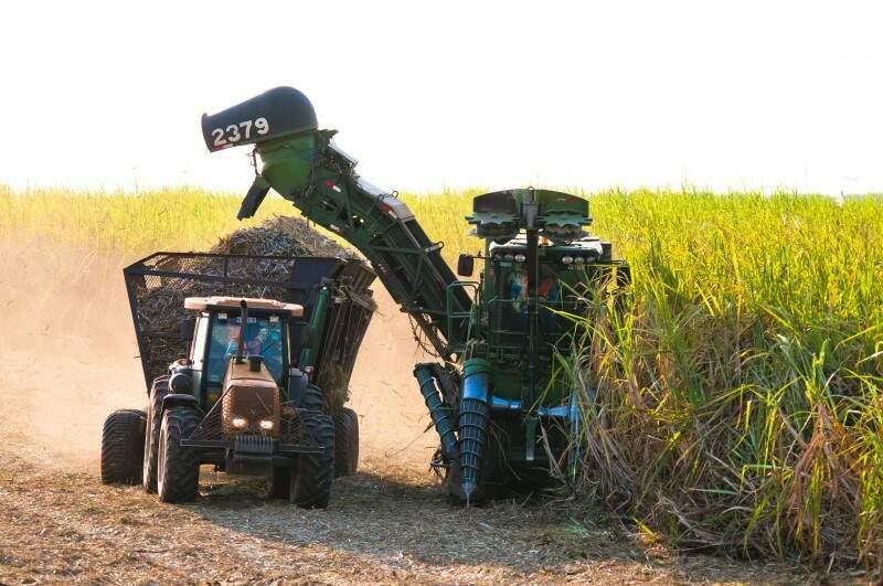 Estado é o 4º maior produtor de cana-de-açúcar do país. (Foto: Biosul)