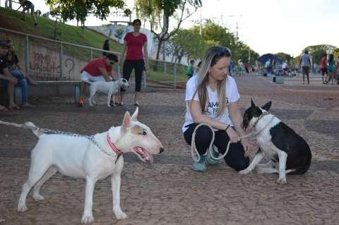 Encontro de criadores defende que cães pit bull e terriers também são dóceis