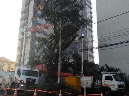 Após reportagem, funcionários iniciam poda de árvore que ameaçava banca