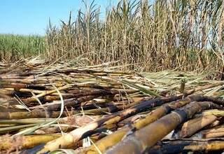 Em 2012, produção de cana atingiu 5,71 milhões de toneladas em Rio Brilhante (Foto: Divulgação)