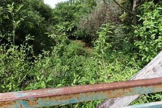 Vegetação invade trecho onde era lago do Parque Sóter. (Foto: Henrique Kawaminami)