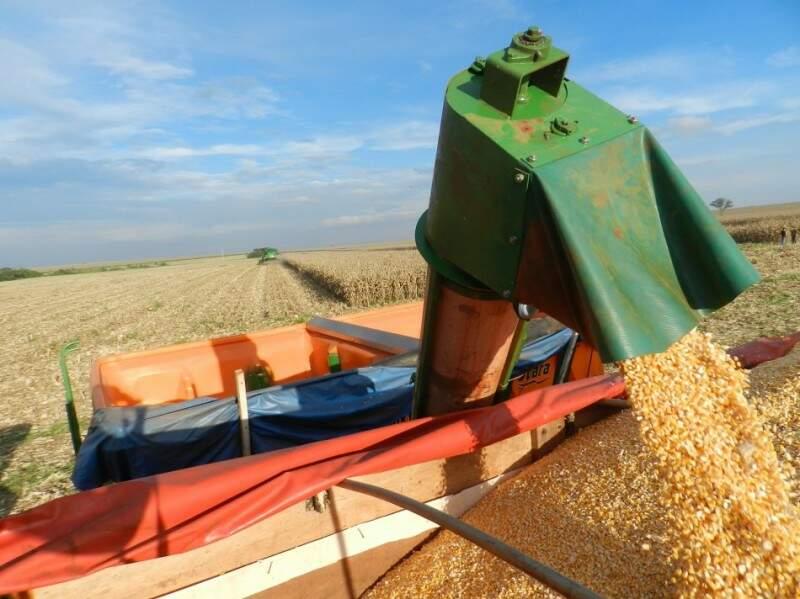 Valor bruto de produção do milho estimado para este ano é de R$ 3,9 bilhões. (Foto: Famasul)