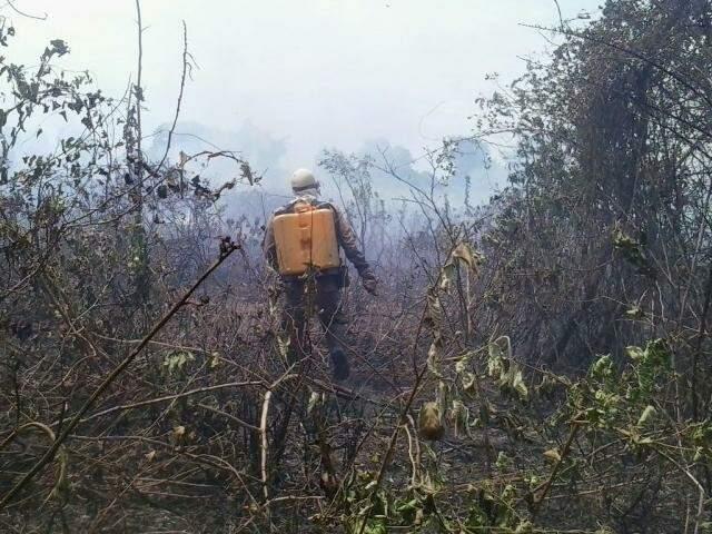 Ainda há riscos de novos focos na região afetada (Foto: Divulgação/Bombeiros)