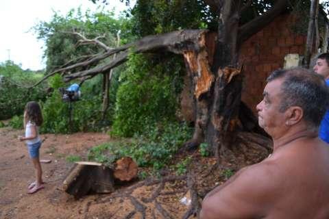Apesar de apelo por corte, árvore derruba varanda no Tiradentes
