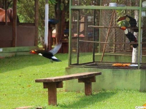 Mini zoológico com animas e aves.