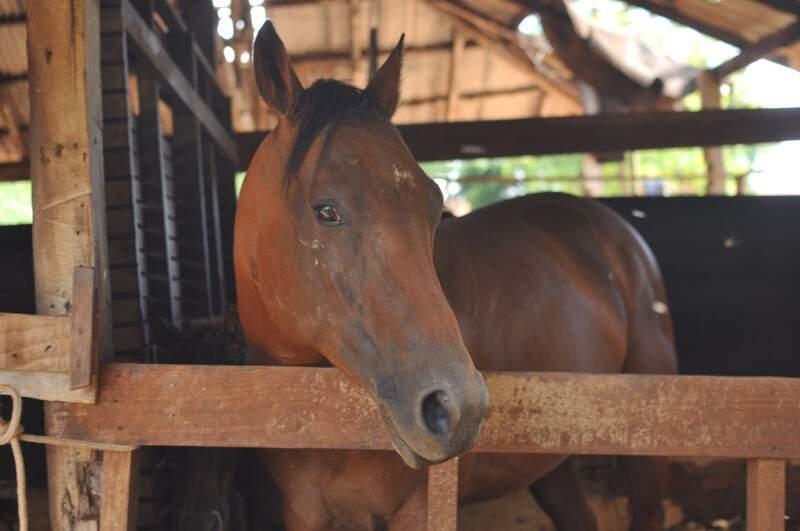 Um dos cavalos da propriedade que habita o celeiro. (Foto: Alcides Neto)