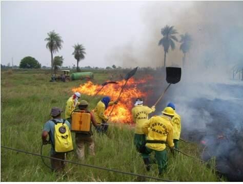 Brigadas trabalham no combate a queimada. Este ano, ocorrência está maior já em março. (Foto: Divulgação)