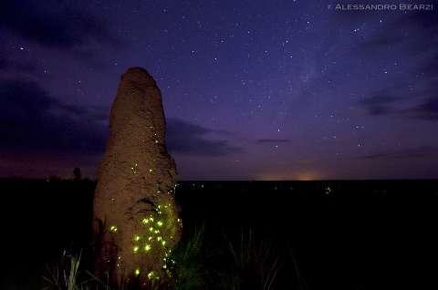 Quer ver o fenômeno dos cupinzeiros iluminados em Costa Rica? É agora!