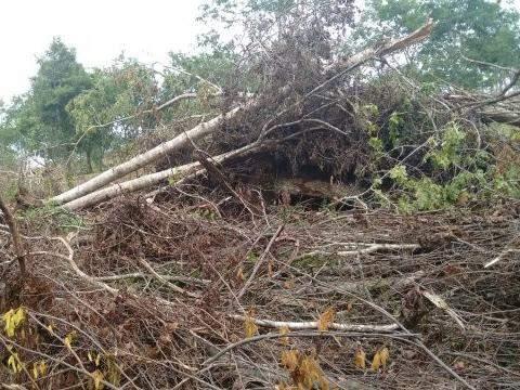 Foram desmatados aproximadamente 24 hectares. (Foto: Divulgação PMA)