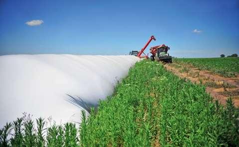 Armazéns estão lotados e produtores não têm onde estocar milho safrinha