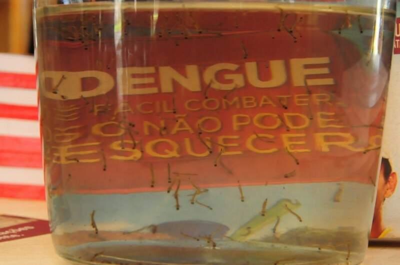 Dengue cresceu 28,07% em Mato Grosso do Sul. (Foto: Rodrigo Pazinato;Arquivo)