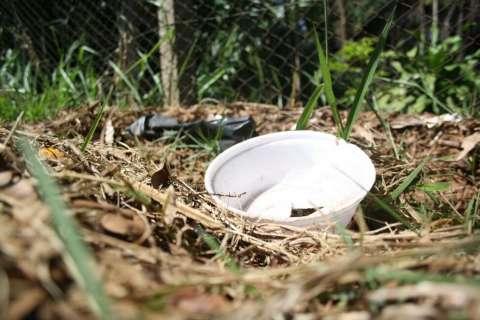Ministério vê risco de epidemia de dengue na Capital e mais 17 cidades