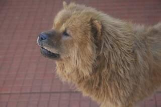 Para magistrados, cachorro é vítima da doença, que tem tratamento permitido em 88 países (Foto: Cleber Gellio)