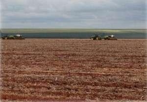 Produtor finaliza plantio do algodão safra, mas safrinha ainda é dúvida