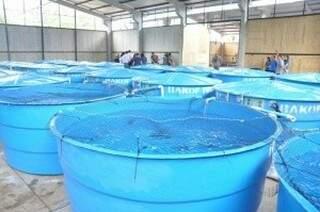 Cerca de 10 mil peixes morreram, segundo relatório da empresa Anambi, responsável pela quarentena nos tanques (Foto: Marcelo Calazans)