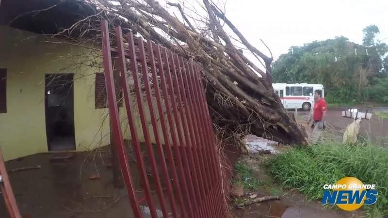 Moradora já tinha acionado prefeitura por árvore que caiu