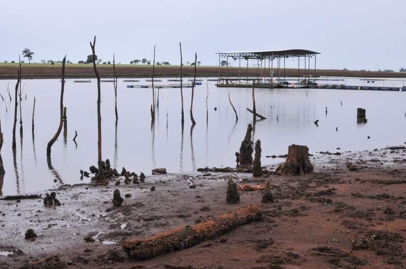Com a queda no nível do córrego, árvores que ficaram submersas por 42 anos voltaram a aparecer. (Foto: Alcides Neto)