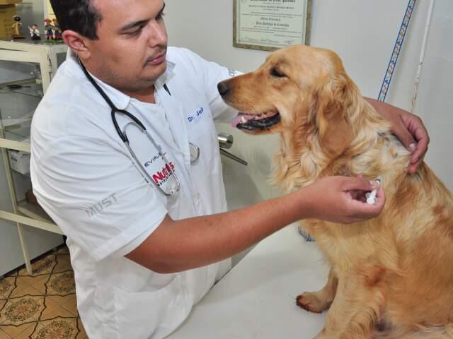 Serão enviadas 675,2 mil doses de vacina para MS. (Foto: João Garrigó)