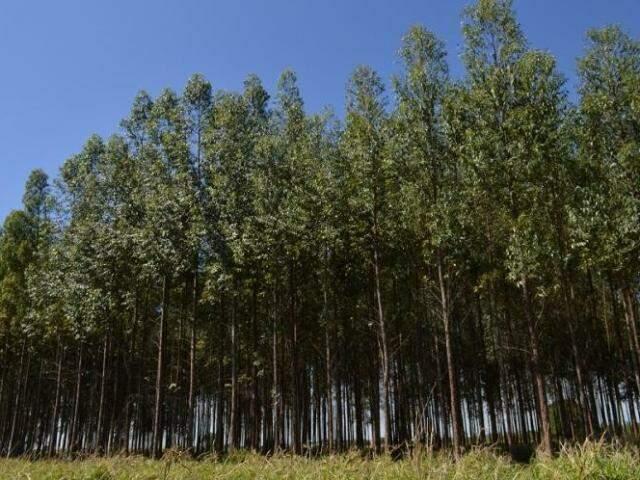 Aumentou exportação de produtos florestais em MS (Foto: Divulgação/Famasul)