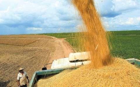 Preço do milho cai e valor da produção deve crescer apenas 1,71% em MS