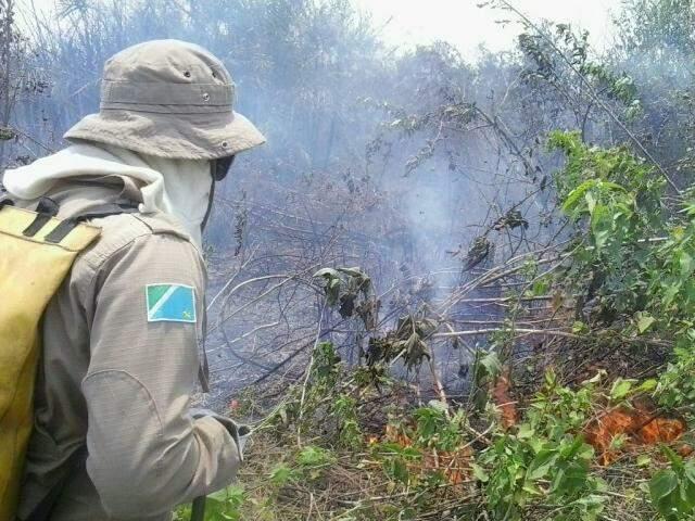 Chamas se alastraram por 3 km da planície pantaneira (Foto:Divulgação/Bombeiros)
