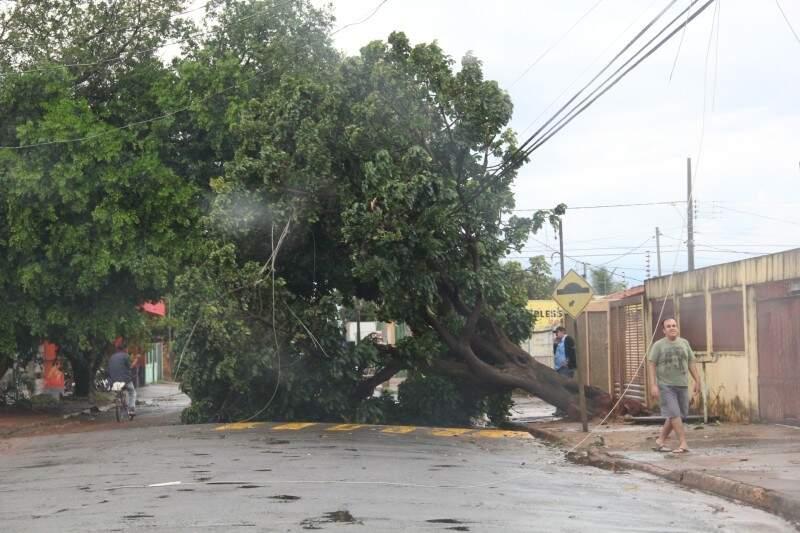 Na Capital, chuva provocou queda de árvores e casas foram destelhadas com a força do vento de mais de 60 Km por hora. (Foto: Marcos Ermínio)