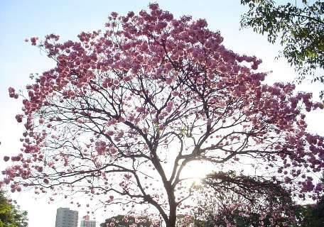 Parque das Nações ganhará bosque em homenagem aos 40 anos de MS