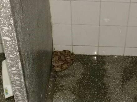 Funcionário da limpeza encontrou o réptil (Foto: Divulgação/Bombeiros)