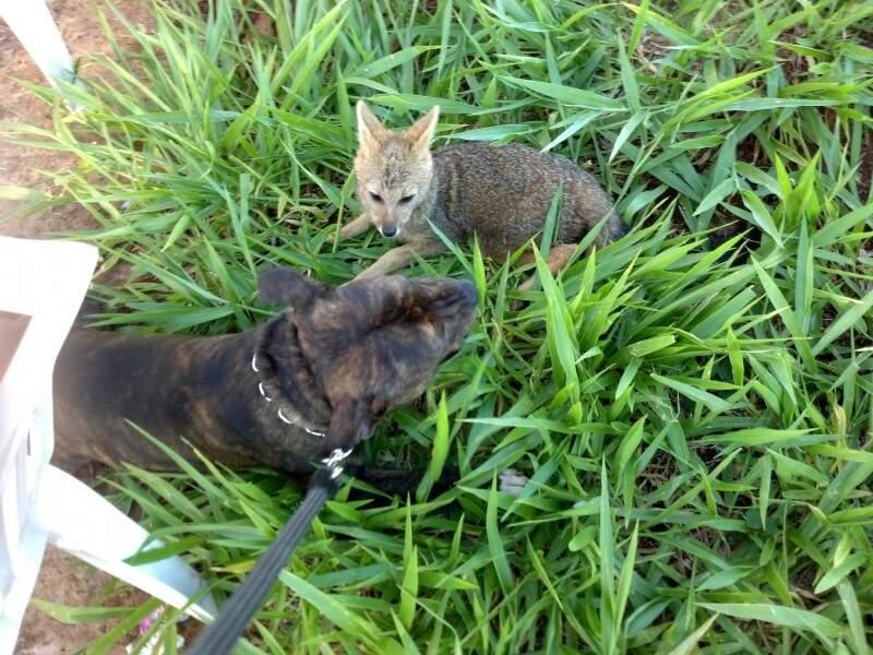 A dupla ficou junta por mais de 30 minutos. (foto: Eduardo Francisco dos Santos Filho)