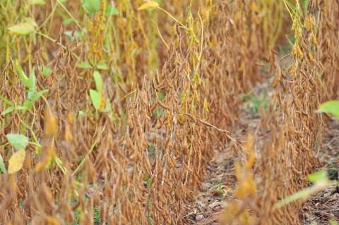Cadastro obrigatório de área de soja encerra dia 10 de janeiro em MS