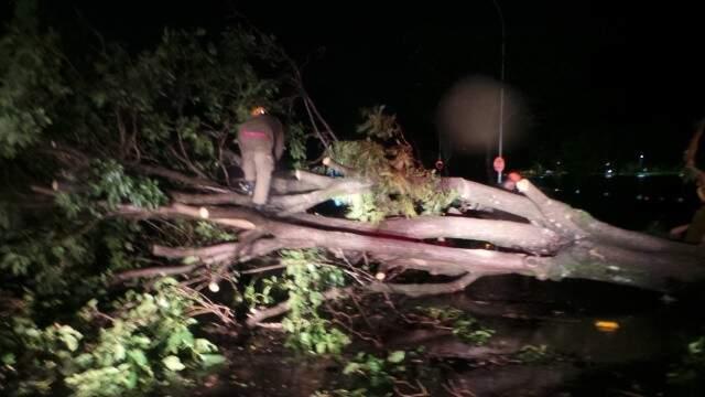 Árvores foram derrubadas por vento forte em Três Lagoas. (Foto: Ricardo Ojeda)