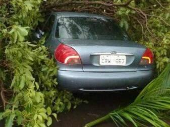 Árvore caiu em carro estacionado perto da biblioteca municipal.