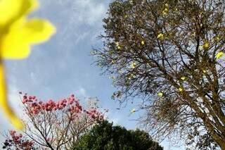 Apesar do inverno, as flores continuam a embelezar Campo Grande.  (Foto: Marcos Ermínio)
