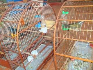 Proprietário não tinha autorização ambiental (foto: divulgação)