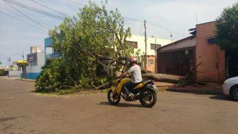 Árvore arrancada pela raiz durante temporal interdita rua no Jardim Leblon
