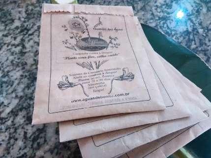 Para combater a dengue, hotel investe na distribuição de sementes de planta