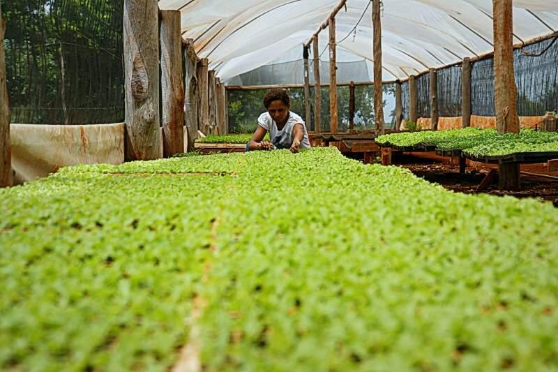 Estufa é sinônimo de que produção dá certo e traz progresso ao campo. (Foto: Cleber Gellio)