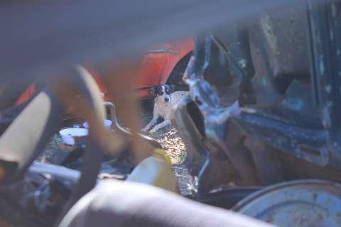 Vira-lata sobreviveu a acidente, mas até hoje dorme no carro do dono que morreu