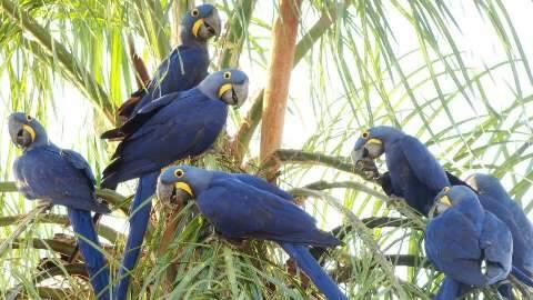 Listamos 7 destinos em Mato Grosso do Sul para você curtir a natureza