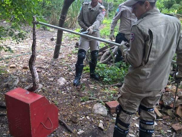 Animais foram soltos em área nativa (Foto: Divulgação/Bombeiros)