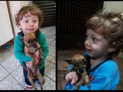 Pinscher de garotinho de 2 anos some e família oferece R$ 1 mil de recompensa