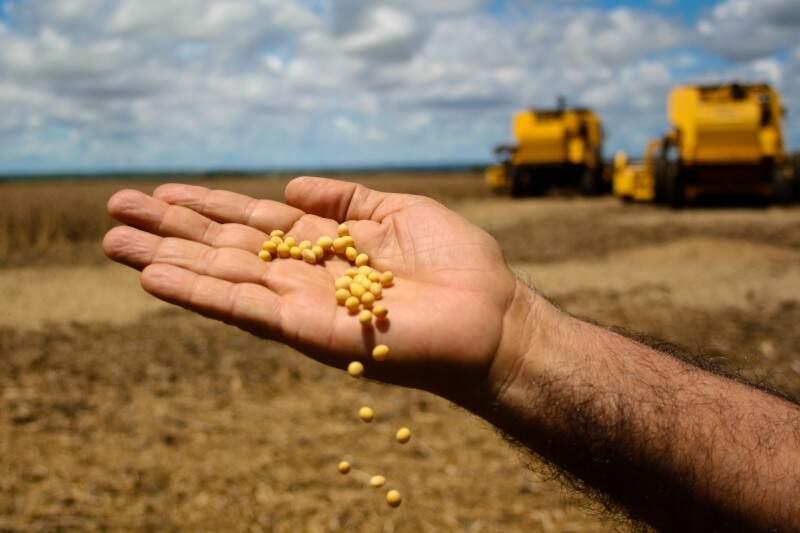 Segundo IBGE, Mato Grosso do Sul é o quinto maior produtor de grãos do país. (Foto: Marcos Ermínio)