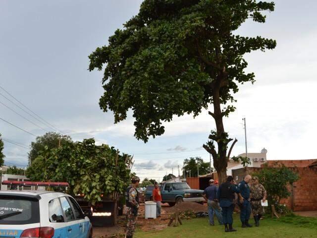 Árvore foi podada sem autorização da prefeitura. (Foto: Luana Rodrigues)