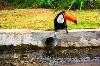 Tucano dá uma pausa para tomar água na rua da Paz. (Foto: Marcos Ermínio)