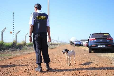 Família do dono quer levar para casa cão que vive no pátio do Detran