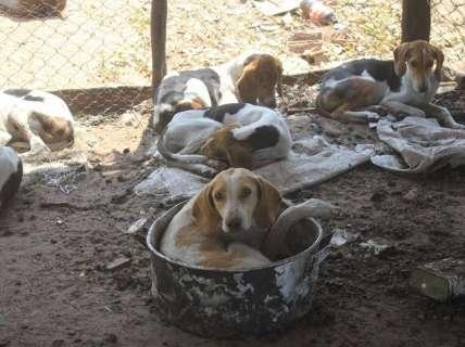 Dono surge, leva 3 cães resgatados de maus-tratos e protetores desconfiam