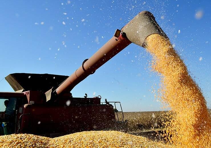 Chuva atrapalha colheita de milho na região sul do Estado. (Foto: Famasul/Divulgação)