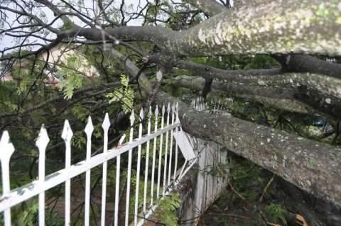 Chuva e vento derrubam árvore e deixam moradores sem energia