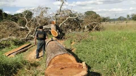 PF flagra desmatamento ilegal praticado por índios e quilombolas