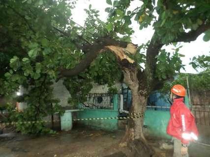 Ventania na madrugada derruba árvores em rodovia e galho em árvore